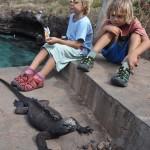 iguane-marin