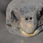 tortue-centenaire
